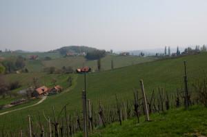 Der Buschenschank liegt direkt am Weingarten.