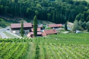 Direkt am Weingarten liegt das Weingut Georgiberg etwas abseits der Weinstraße.