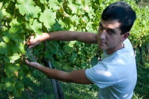 Jungwinzer Jürgen Atschko baut sich seinen eigenen Weinbetrieb auf. Derzeit arbeitet er am Sturm, der beim Aufsteirern in Graz serviert wird.