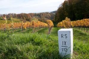 Manche Weingüter hatten schon immer sowohl auf österreichischer als auch slowenischer Seite ihre Weingärten.