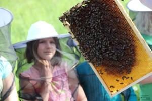 Interessant, was die Bienen so schaffen! (Foto: Ulrike Elsneg)