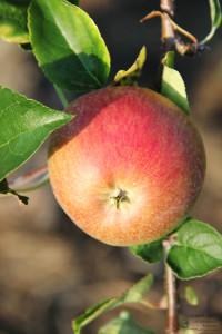 Fruchtsaftverkostung Obsthof Dietrich (Foto: Ulrike Elsneg)