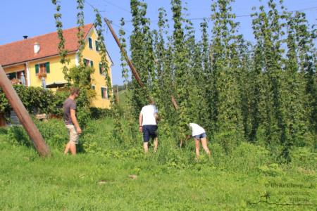 Mini-Golftour in Leutschach an der Weinstraße (Foto: Ulrike Elsneg)