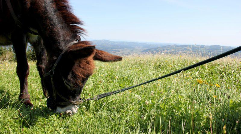 Eselwandern in der Südsteiermark