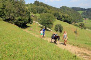 Eselwandern (c) Ulrike Elsneg TV Die Südsteirische Weinstraße (2)