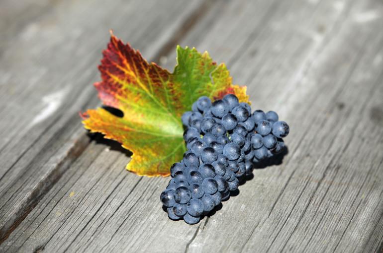 Biologisch- und Biodynamischer Weinbau